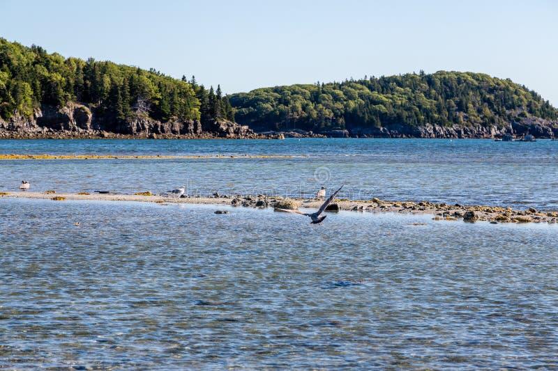 Gulls on Sandbar at Low Tide stock image