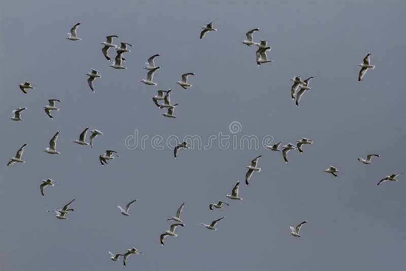 Gulls and Sky royalty free stock images