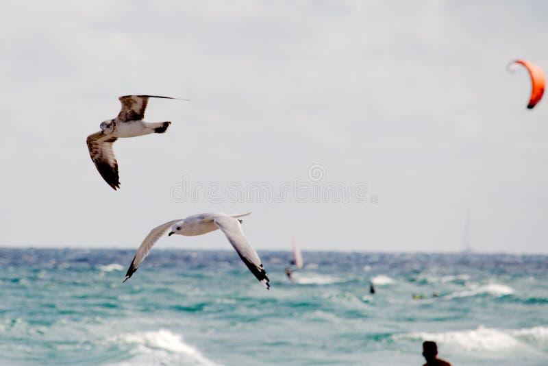 Gullsin flyg royaltyfria foton