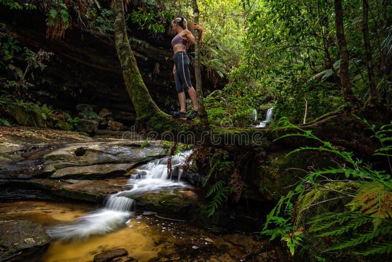 Gullys verts luxuriants les explorant avec les courants d?bordants de montagne photo libre de droits