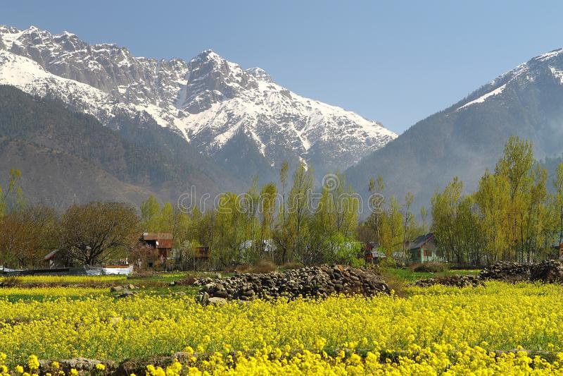 Gulmarg, Srinagar, India: Pi?kny krajobraz z ?nie?n? g?r? zdjęcie stock