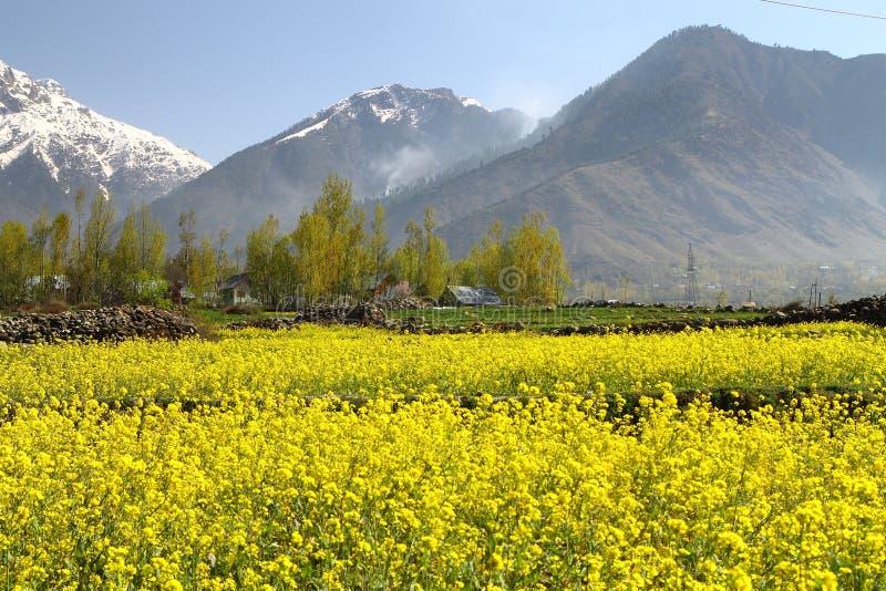 Gulmarg, Srinagar, India: Pi?kny krajobraz z ?nie?n? g?r? obrazy stock