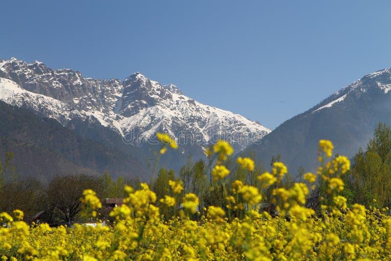 Gulmarg, Srinagar, la India: Paisaje hermoso con la monta?a de la nieve fotografía de archivo