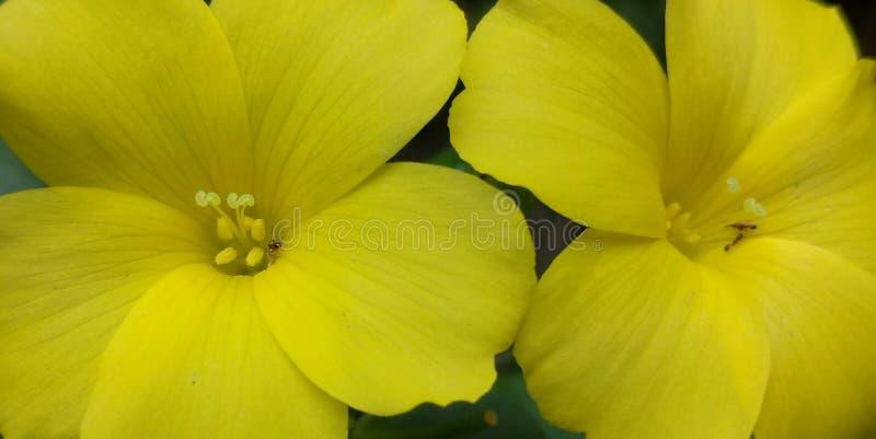 Gulna blommor arkivfoto