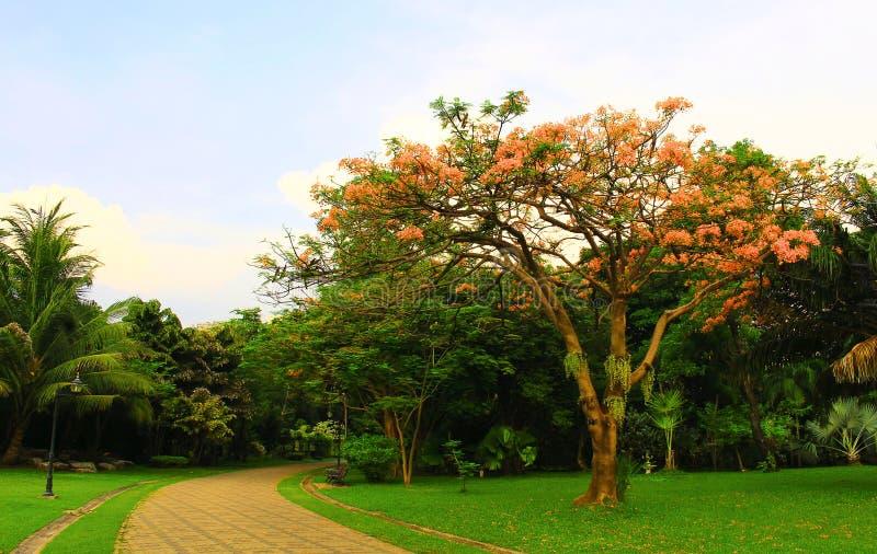 gulna blommor som är härliga, bakgrund, natur, fotografering för bildbyråer