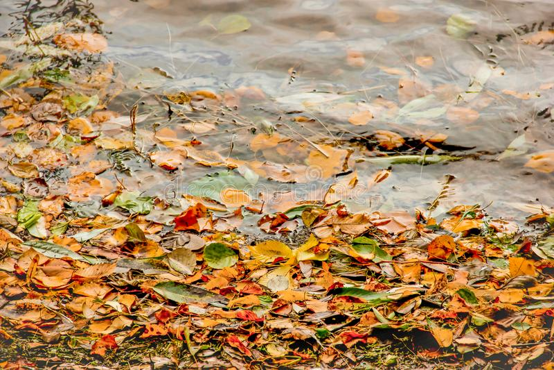 Gulna, gräsplan och röda trädhöstsidor, ramsammansättning på vattenbakgrund Stor säsongtextur med nedgånglynne royaltyfria bilder