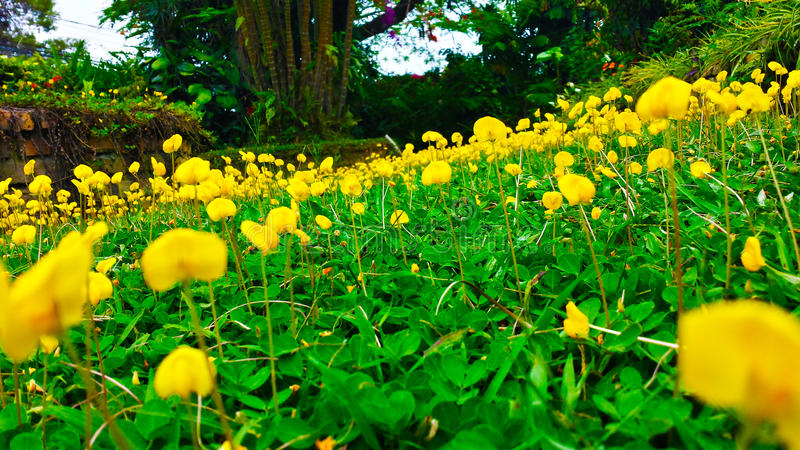 Gulna trädgården arkivfoton