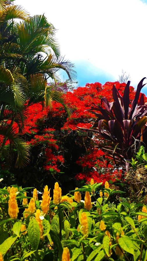 Gulna trädgården fotografering för bildbyråer