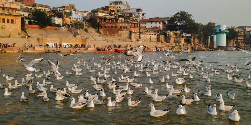 Guloseimas de luz dourada em Varanasi Índia foto de stock royalty free