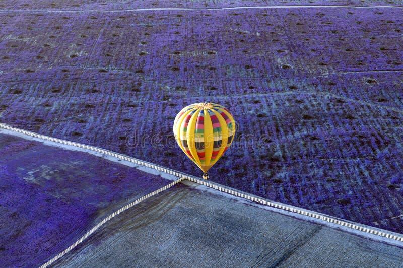 Gult flyg för ballong för varm luft över ett fält av lavendel royaltyfri fotografi