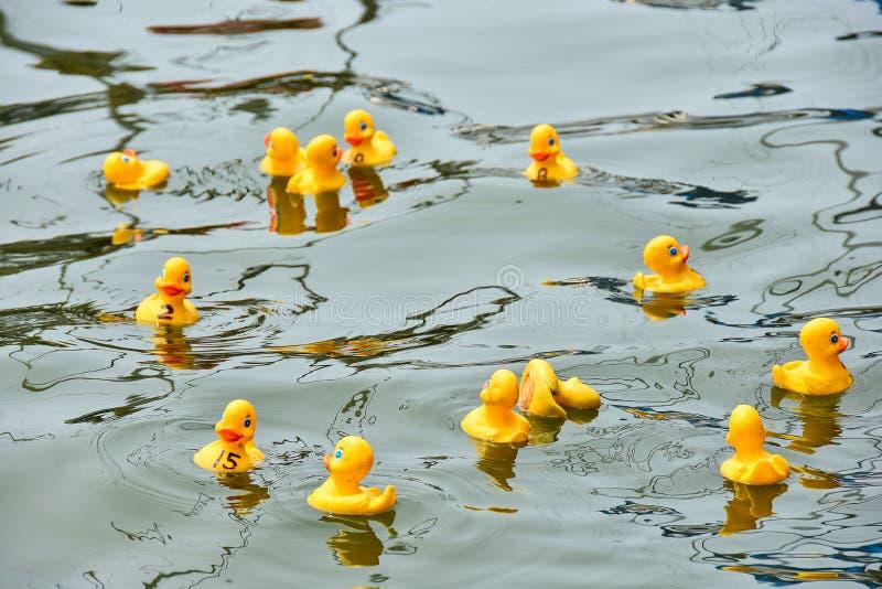 Gult gummi duckar i lopp arkivfoton
