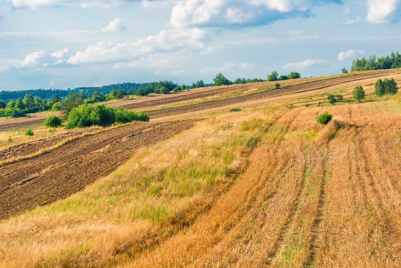 Gult härligt landskap - töm fältet i sen sommar efter mummel arkivfoto