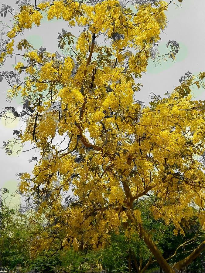 Gult härligt träd royaltyfri fotografi