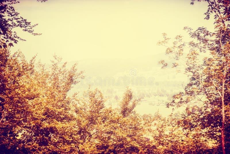 Gult höstsuddighetslandskap med träd och himmel fotografering för bildbyråer