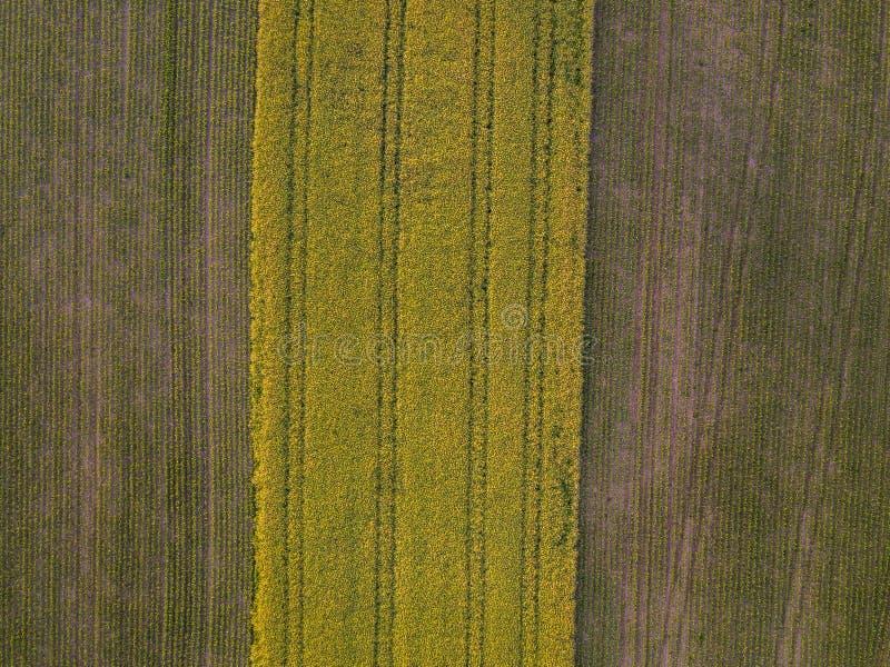 Gult kornfält från luftfotografierna arkivbilder