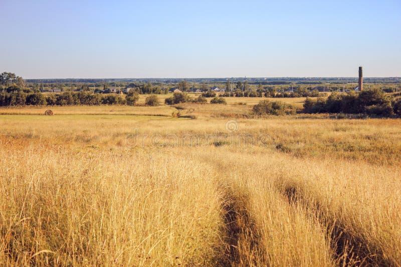 Gult torrt gräs i fältet, blå himmel, höstlandskap, bakgrund arkivfoton