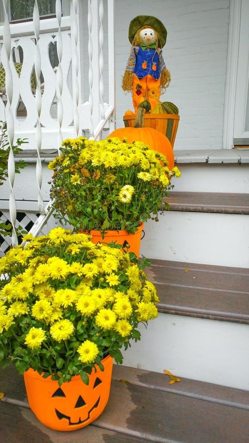 Gult växa för krysantemumblommor i pumpakrukor arkivfoto