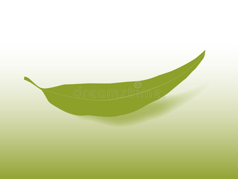 Gum Leaf. Simple vector gum leaf with shadow on a gradient background vector illustration