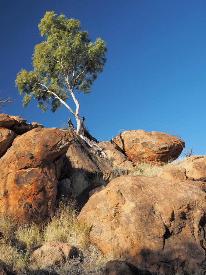 Gum Tree on a outback rock formation near the old Telegraph Station. Alice Springs, Australia, June 2015 stock images