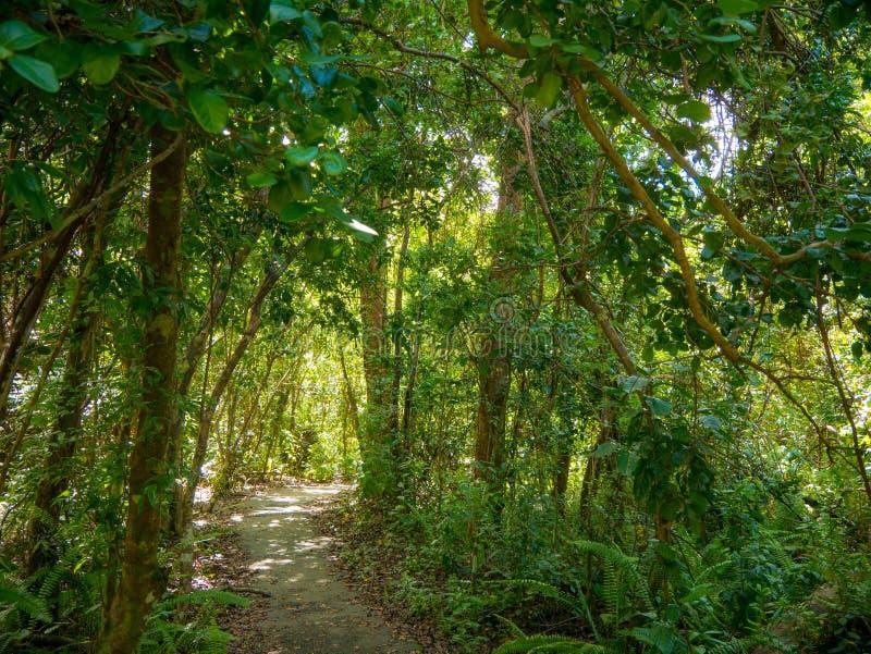 Gumbo Limbo Trail of the Everglades National Park Boardwalks i träsket Florida, Förenta staterna royaltyfria foton