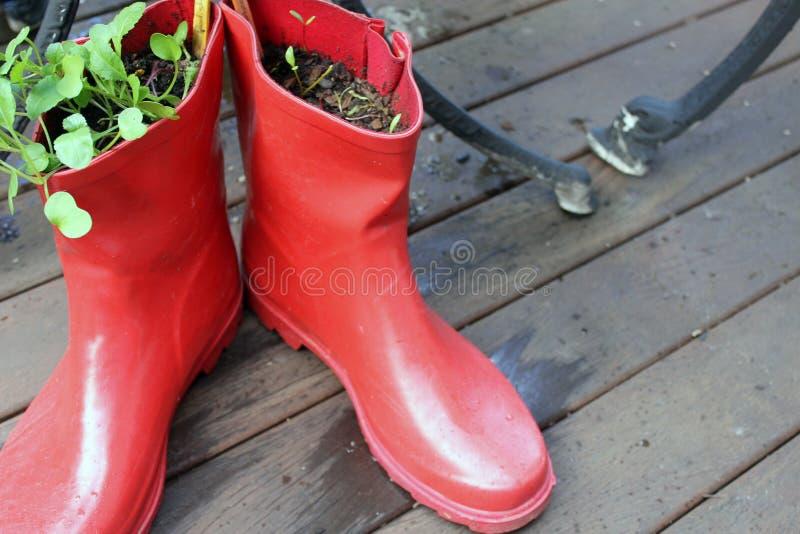Gumboots στον κήπο στοκ φωτογραφίες