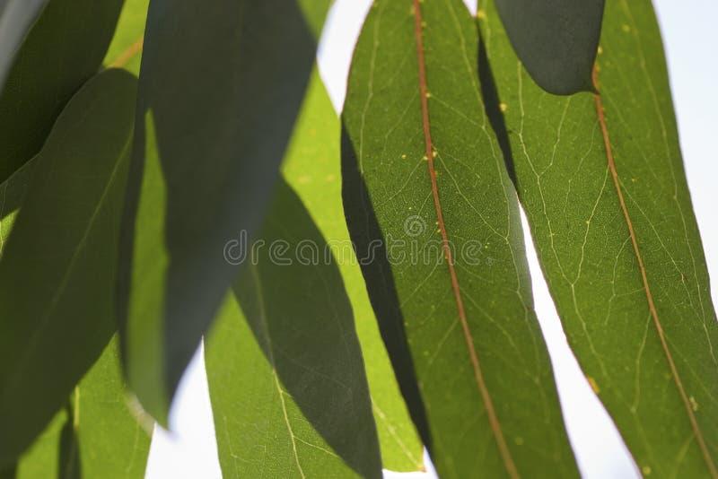 Gummi-Blätter stockfotografie
