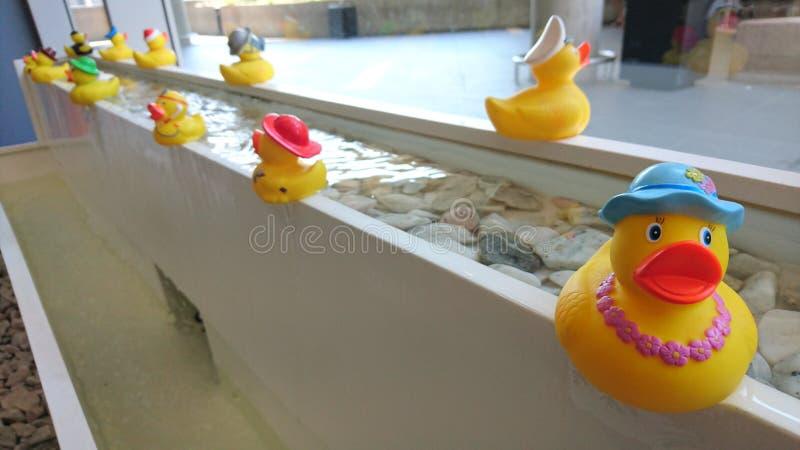 gummi duckar på en springbrunn royaltyfri bild