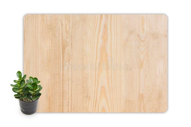 Gummianlage (Ficus) in den kleinen Töpfen auf hölzernem Beschaffenheit backgroun lizenzfreie stockfotografie