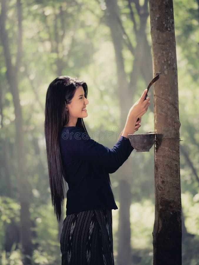 Gummibaum und Frauen schönes Thailand lizenzfreies stockfoto