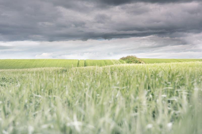 Gummihjulspår i det nya gröna gräset som leder in mot mörk molnig himmel - lantliga Skottland fotografering för bildbyråer