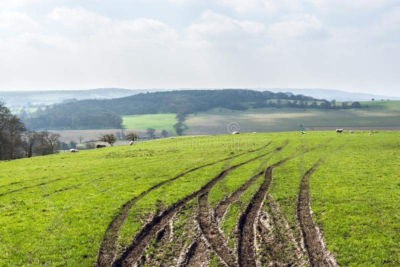 Gummihjulspår på en kulle av Chilternsen i tidig vår - 1 royaltyfria bilder