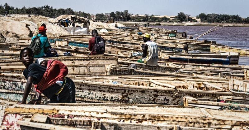 Gummilack Rose, Senegal lizenzfreie stockfotografie