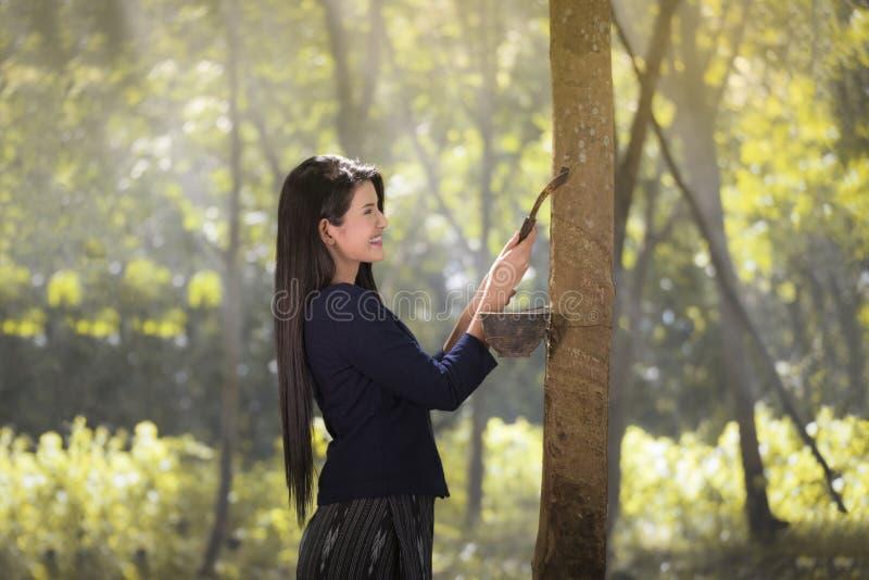 Gumowy lateks gumowy drzewo zdjęcia royalty free