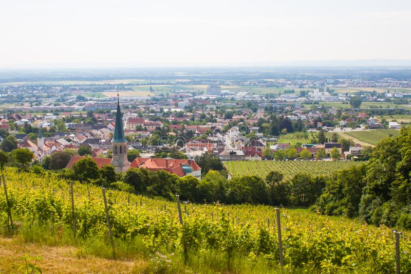 Gumpoldskirchen Österrike vingårdar royaltyfri foto