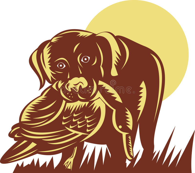 Download Gun dog retrieving a duck stock illustration. Image of bird - 11811436