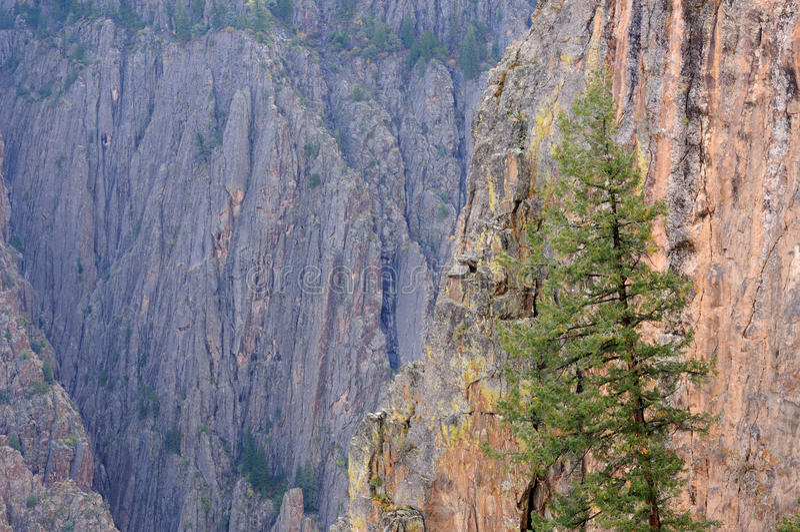 gunnison nero del canyon fotografie stock libere da diritti