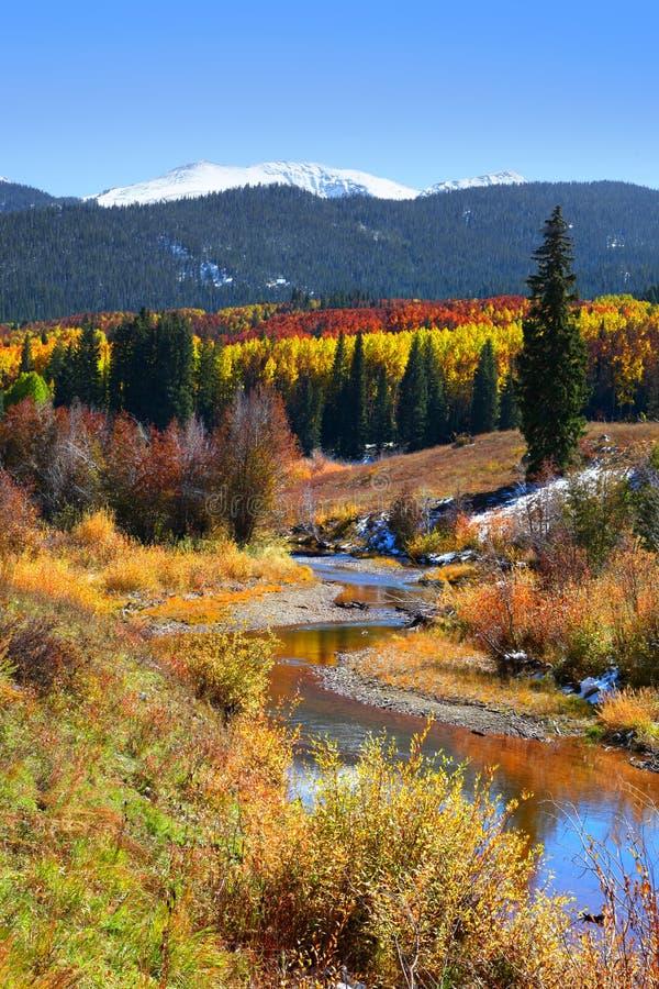 Gunnison-staatlicher Wald lizenzfreie stockfotos
