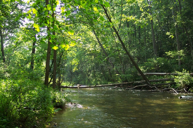Download Gunpowder River Trees stock image. Image of release, trees - 7927