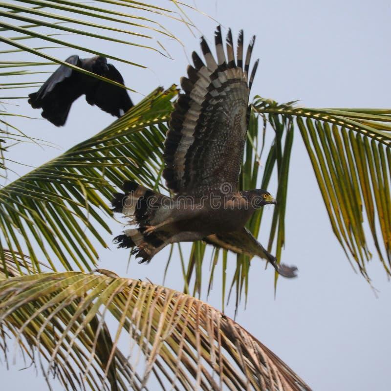 Gunstige vogel royalty-vrije stock afbeelding