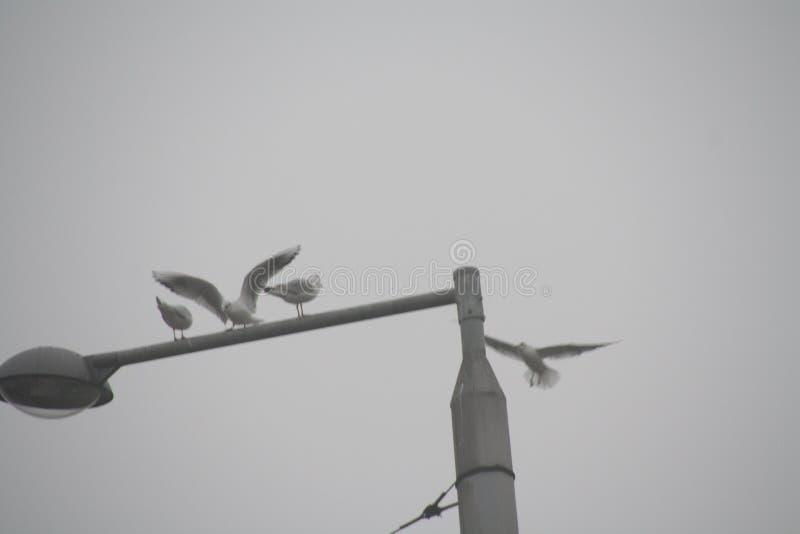 Guos plateados volando alrededor de la luz de la calle foto de archivo libre de regalías