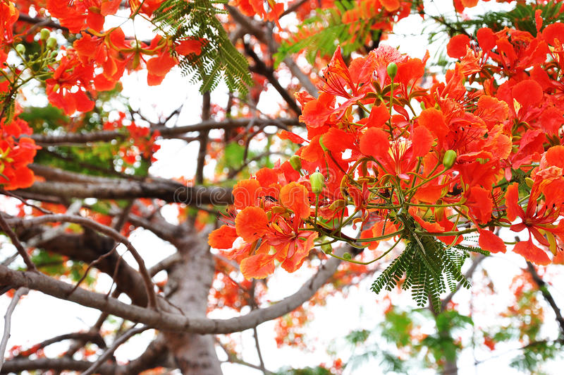 Guppy flower tree stock photos
