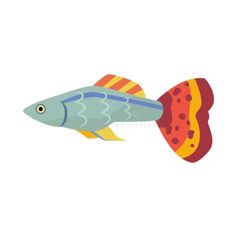 Guppy ryba zdjęcia stock