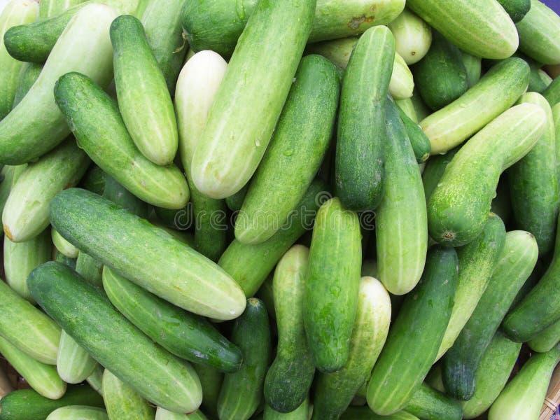Download Gurke stockbild. Bild von niemand, frucht, saft, frische - 96929717