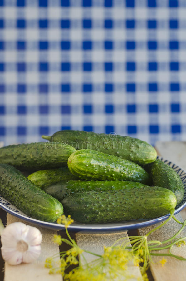 Gurken mit Pickeln auf der Platte mit Schottenstoffhintergrund stockbilder