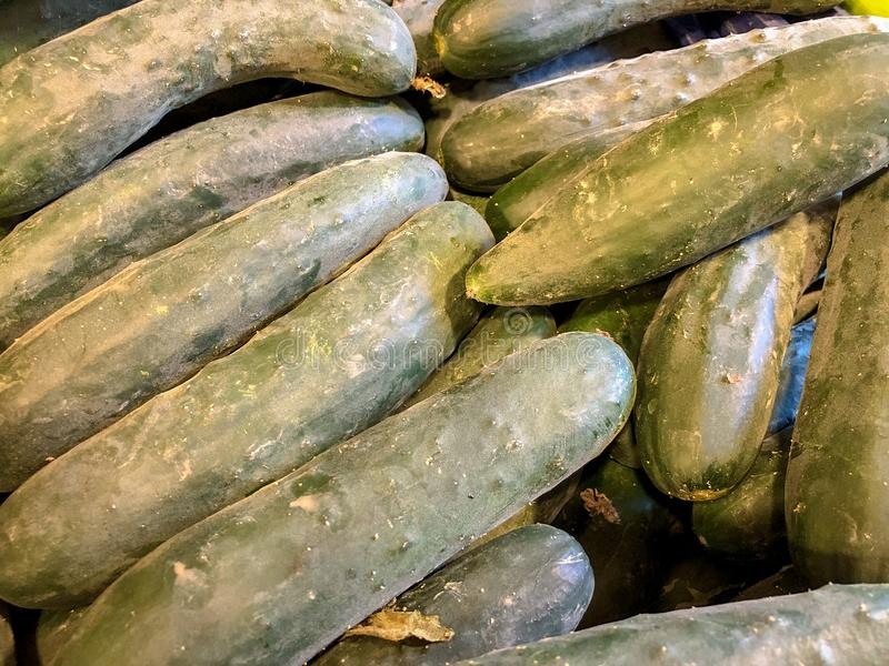Gurkenhintergrund Gurkenernte viele Gurken Gurken vom Feld gemüse Gesundes Lebensmittel des Sommers stockfoto
