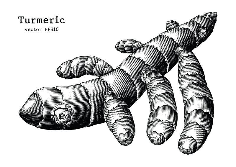 Gurkmeja rotar konst för gem för handattraktiontappning som isoleras på vit backg stock illustrationer