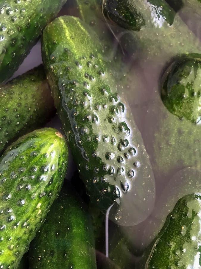 Gurkor i vatten arkivbilder