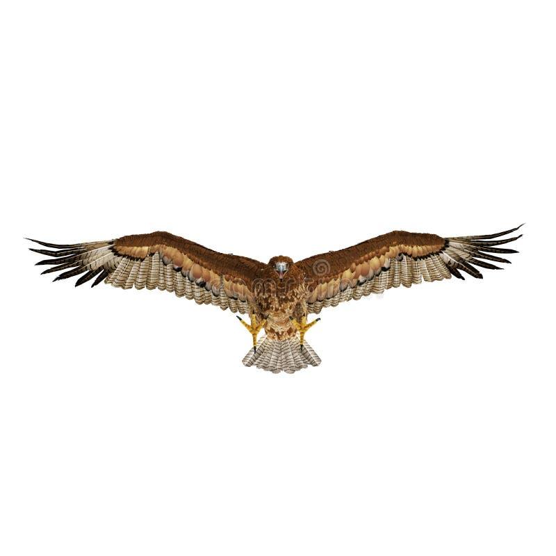 Gurney Eagle op wit Front View 3D Illustratie vector illustratie
