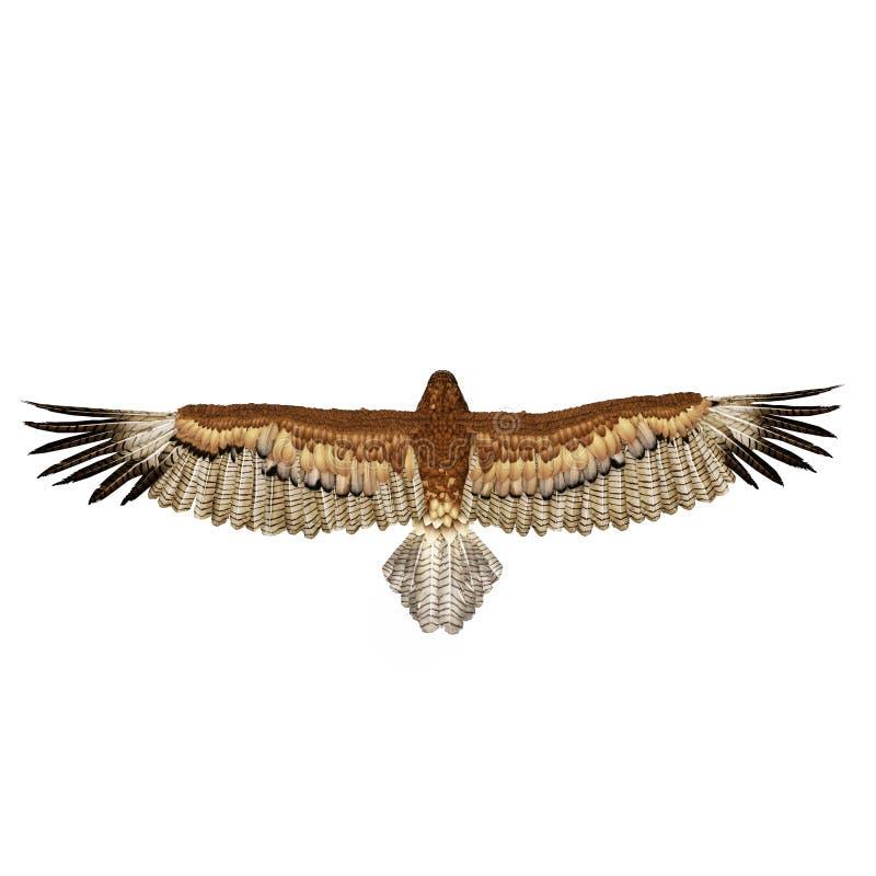 Gurney Eagle op wit Hoogste mening 3D Illustratie royalty-vrije illustratie