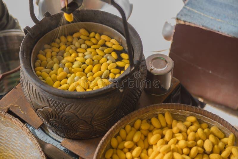 Gusano de seda de ebullición del capullo del color amarillo hermoso en un pote fotos de archivo libres de regalías